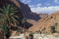 Palm Trees and Creekbed Below Limestone Cliffs, Morocco Fine-Art Print