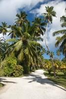 Seychelles, La Digue, Palm lined country path Fine-Art Print