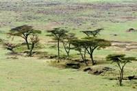 The Bush, Maasai Mara National Reserve, Kenya Fine-Art Print