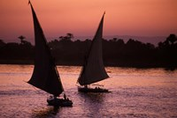 Traditional Feluccas Set Sail on the Nile River, Egypt Fine-Art Print