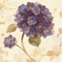 Abundant Hydrangea I Fine-Art Print