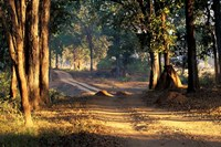 Rural Road, Kanha National Park, India Fine-Art Print