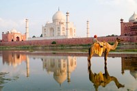 Young Boy on Camel, Taj Mahal Temple Burial Site at Sunset, Agra, India Fine-Art Print