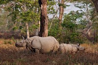 One-horned Rhinoceros and young, Kaziranga National Park, India Fine-Art Print