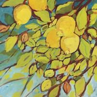 The Lemons Above Fine-Art Print