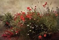 Poppy Garden Fine-Art Print
