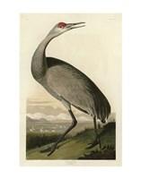 Hooping Crane Fine-Art Print