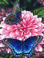 Red Spotted Purple Butterfly Fine-Art Print