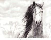 Spirit Fine-Art Print