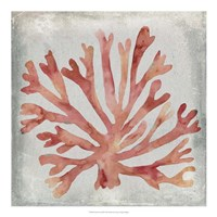 Watercolor Coral III Fine-Art Print