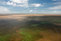 Brazil, Amazon River, Algae bloom Fine-Art Print