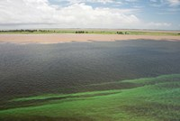Brazil, Amazon River, Santarem Meeting of the Waters Algae bloom Fine-Art Print