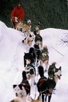Dog Sled Racing in the 1991 Iditarod Sled Race, Alaska, USA Fine-Art Print
