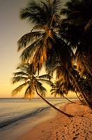 Beach at Sunset, Trinidad, Caribbean Fine-Art Print