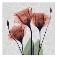 Gentian Marsala Fine-Art Print