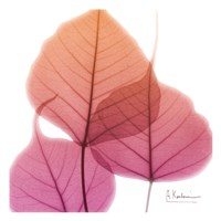Bo Tree Pink Orange Fine-Art Print