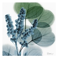 Lilly Of Eucalyptus Fine-Art Print