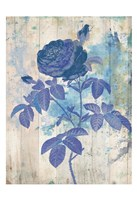 My Blue Rose Fine-Art Print