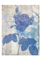 Blue Rose In My Garden Fine-Art Print