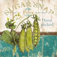 Sugar Snap Fine-Art Print