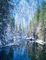 Winter trees along Merced River, Yosemite Valley, Yosemite National Park, California Fine-Art Print