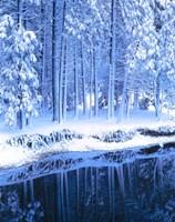 Winter, Conifers, Merced River, Yosemite Valley CA Fine-Art Print