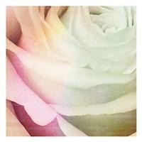 Macro Rose Fine-Art Print