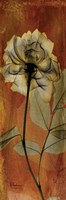 Rose 1 Fine-Art Print