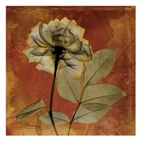 Rose 6 Fine-Art Print