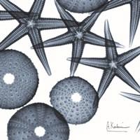 Starfish Trip 3 Fine-Art Print