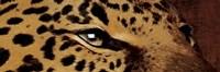 Leopard Eyes Fine-Art Print