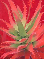 Red Agave Fine-Art Print