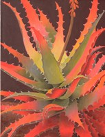 Sunset Agave Fine-Art Print