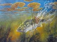 Caught Bass Fine-Art Print