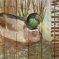 Open Season Mallard Fine-Art Print