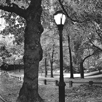 A Light in Central Park Fine-Art Print