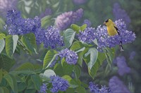 Hint of Gold - Goldfinch and Lilacs Fine-Art Print