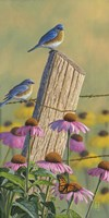 Monarchs of the Prairie - Bluebirds Fine-Art Print