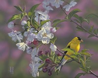 Gold Pink White Goldfinch Fine-Art Print