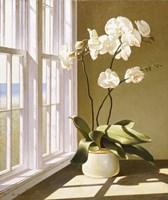 Pot Of Orchids Fine-Art Print