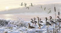 Winter River Geese Fine-Art Print