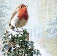 Robin On Ivy Fine-Art Print