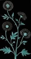 Dandelion Dance Fine-Art Print