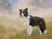 Border Collie 5 Fine-Art Print