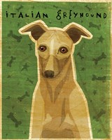 Italian Greyhound - Fawn Fine-Art Print