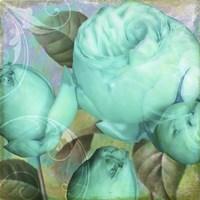 Aqua Rose II Fine-Art Print