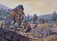 A Herd of Woolly Mammoth and Scimitar Sabertooth, Pleistocene Epoch Fine-Art Print
