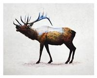 Rocky Mountain Elk Fine-Art Print