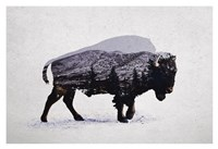The American Bison Fine-Art Print