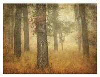 Oak Grove in Fog Fine-Art Print